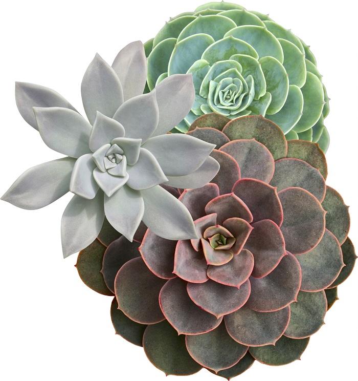 succulentsPost