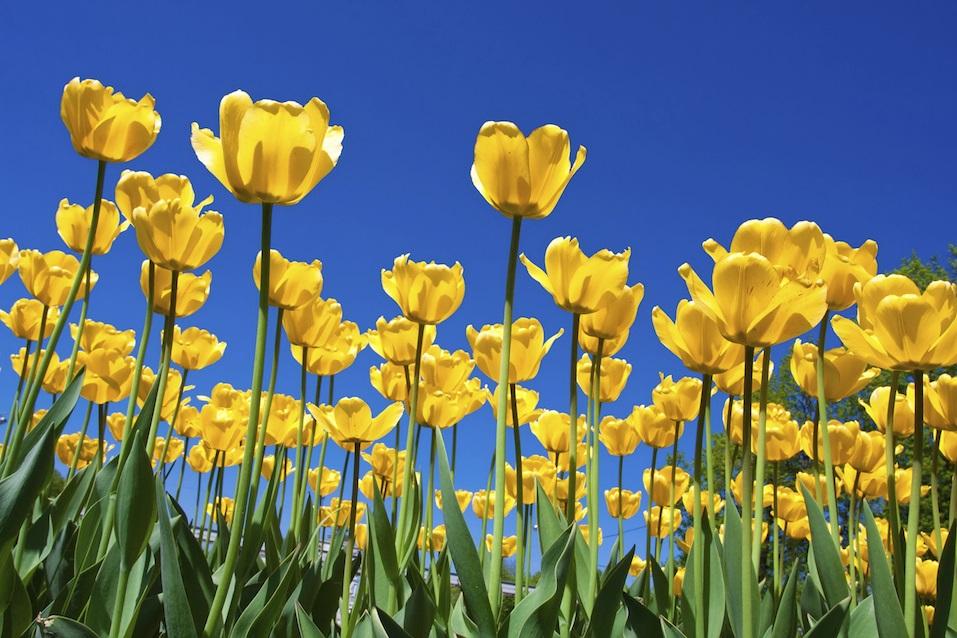Post Yellow Flowers