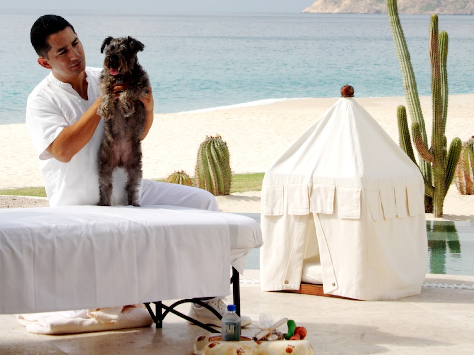 LuxeTrends: The Pampered Pet