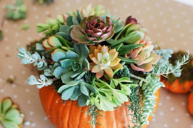 Pumpkin-Succulent-Arrangement-simplyhappenstance.com-72
