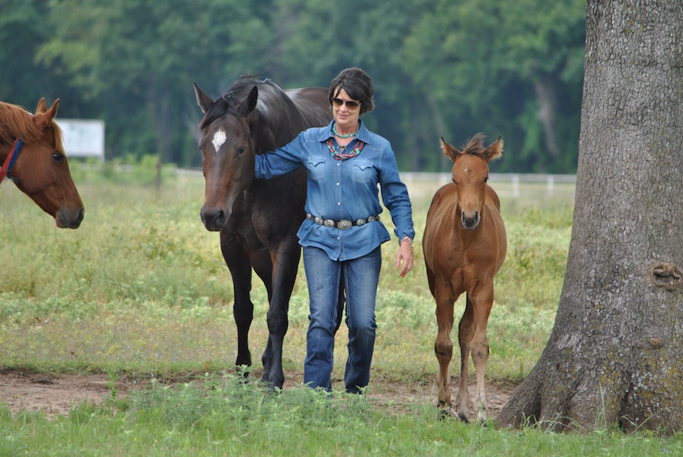 Lisa Moden Loves North Texas Horse Country