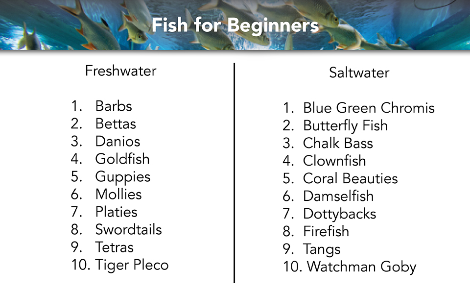 960x600 Fish for Beginners