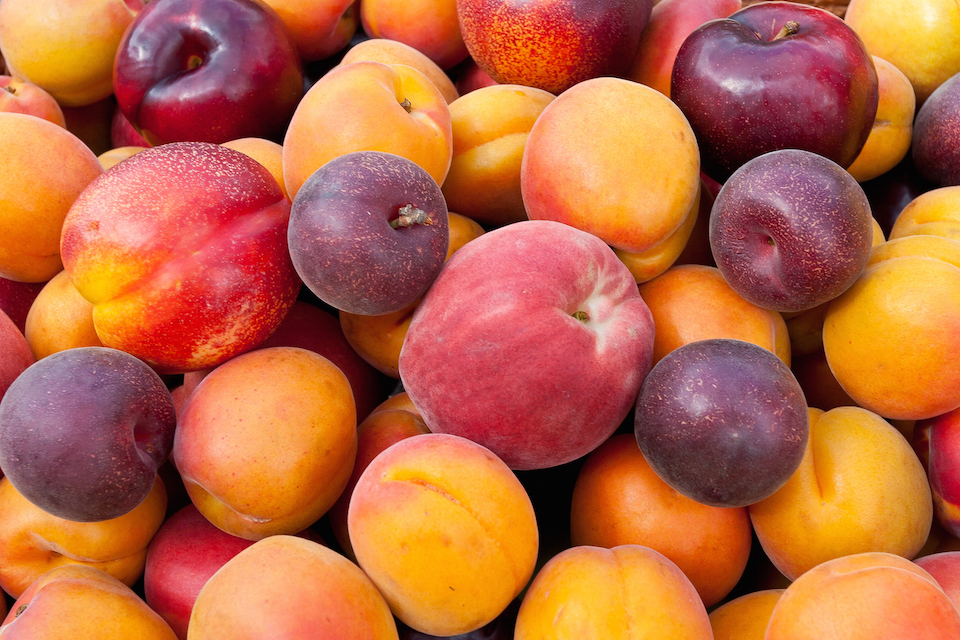 """""""Pile of colorful summer fruits - apricots, nectarines, peaches, plums and red velvet apricots."""""""