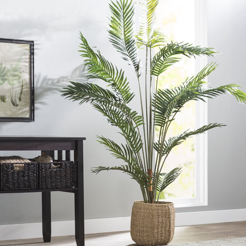 Paradise+Palm+Tree+Floor+Plant+in+Pot